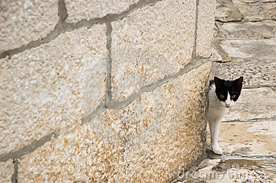 Cat in historical town
