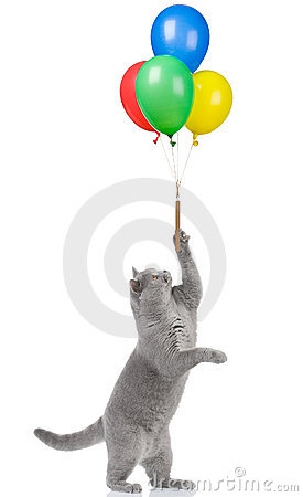Free Cat Holding Balloons Royalty Free Stock Photo - 3002165