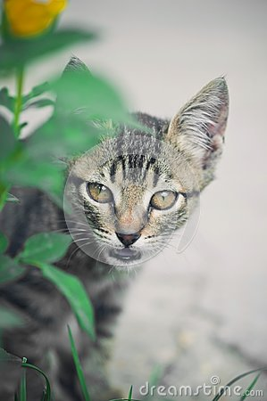 Cat hunting behind green grass