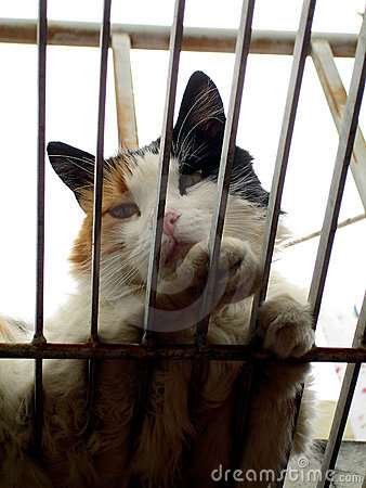 Free Cat In A Cage Stock Photo - 2368470