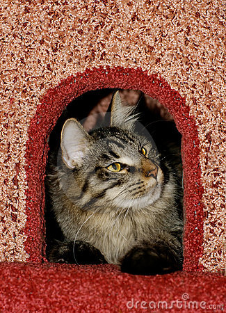 Free Cat In Cat`s Condo Royalty Free Stock Images - 4424109