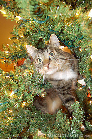Free Cat In Christmas Tree Stock Images - 7995424