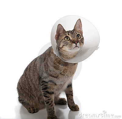 Free Cat In Cone Stock Photography - 16981202