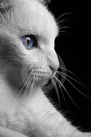 Free Cat In Profile Royalty Free Stock Photography - 1878437