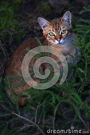 Free Cat In The Dark Royalty Free Stock Photos - 13746558
