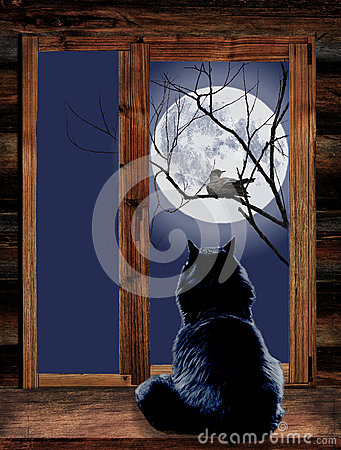 Free Cat In The Window And Bird On Branch At Moonlit Stock Photography - 78971662