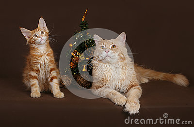 Cat and kitten with a Christmas tree on a brown