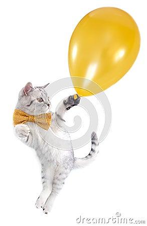 Cat kitten flying with a golden balloon