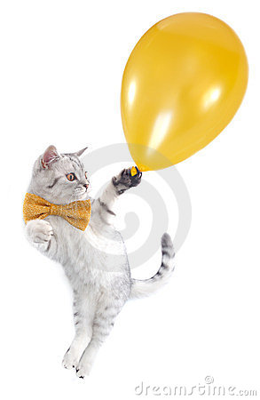 Free Cat Kitten Flying With A Golden Balloon Royalty Free Stock Photography - 23978077