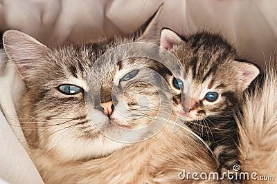Cat and kitten hug