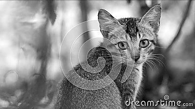 Cat kitten photo - Sad eyes