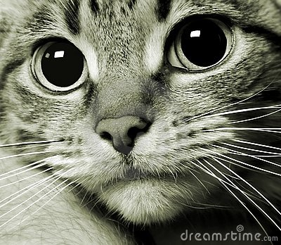 Cat kitty kitten portrait