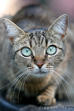 Cat with large eyes