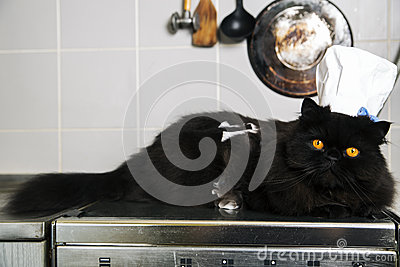 Cat lay on stove with cook hat