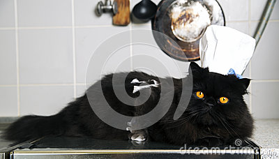 Cat lay on stove with funny look