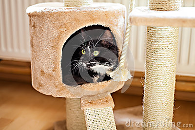 Cat laying in box on the scratching post