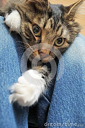 Cat laying inbetween legs