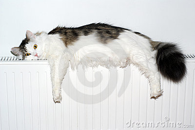 Cat lays down on a white radiator