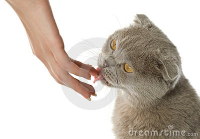 Cat licking a human hand
