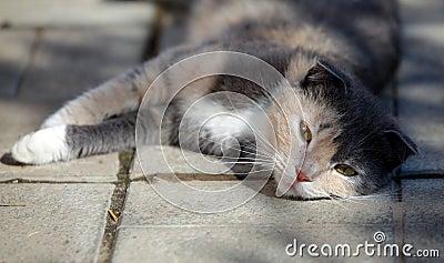 Cat lies on the floor