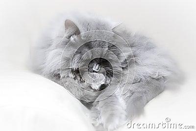 Cat british studio scene poster