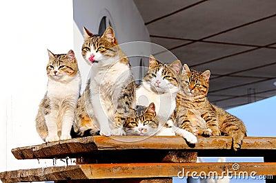 Cat-like family