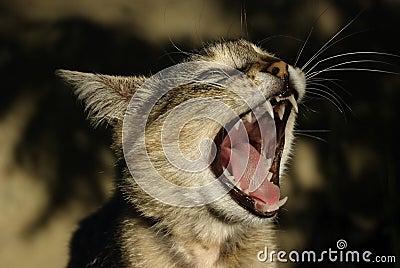 Cat-like songs.