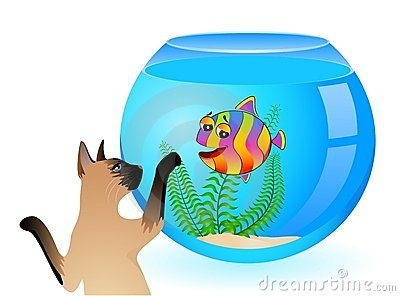Cat with little  fish in aquarium