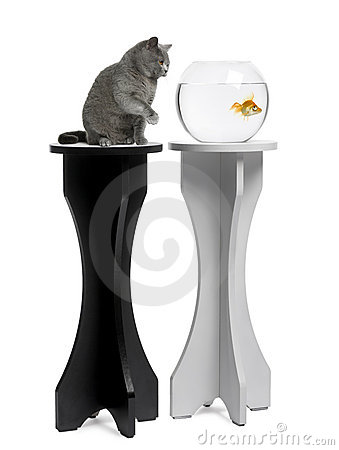 Free Cat Looking At A Goldfish In An Aquarium On Stand Royalty Free Stock Photography - 14847357