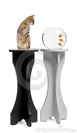 Free Cat Looking At A Goldfish In An Aquarium On Stand Royalty Free Stock Photography - 14847367