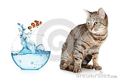 Cat looking at a fish jumping out of an aquarium