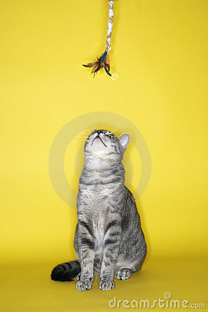 Free Cat Looking Up At Toy. Stock Photos - 2045673