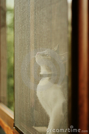 Cat looking on the window