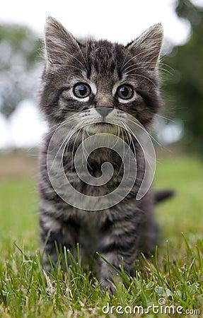 Cat looks surprised