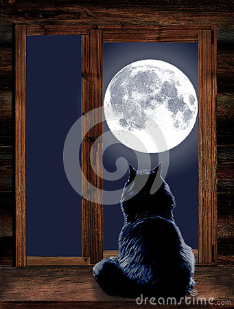 Free Cat Looks Through The Window At The Full Moon Royalty Free Stock Images - 78572289