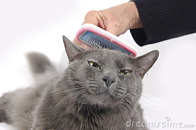 Cat loves being brushed