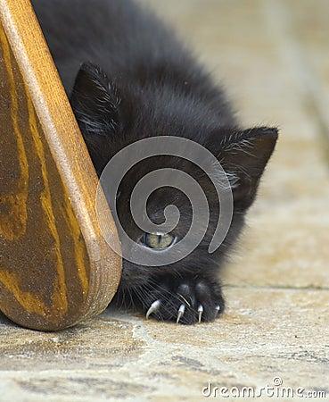 Cat lurking around the corner