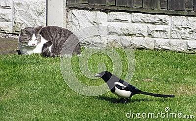 Cat and Magpie