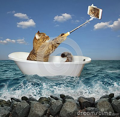 Free Cat Makes Selfie In The Tub 2 Royalty Free Stock Photography - 122578037