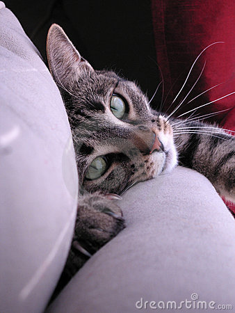 Free Cat Making Eye Contact Stock Photos - 874933
