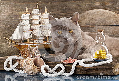 Cat and marine sailboat