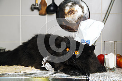 Cat on mealy stove with terrified look