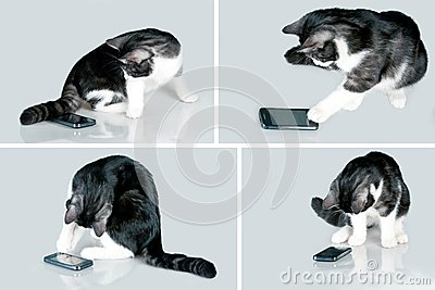 Cat and mobile
