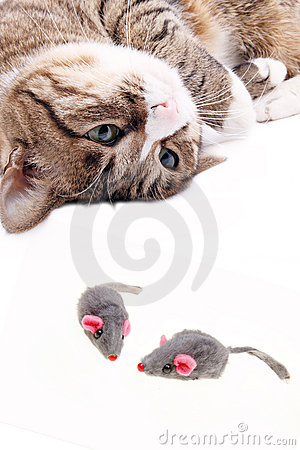 Cat with mouse toy