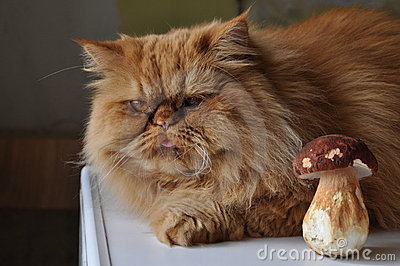 Cat and mushroom