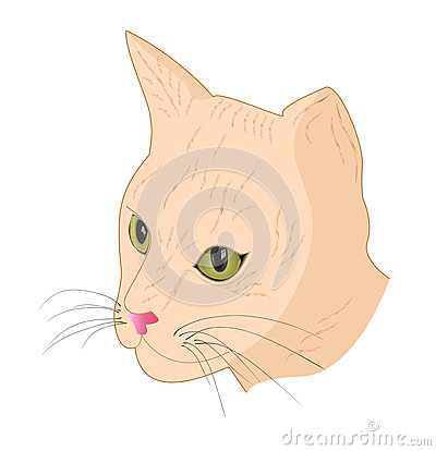 Fawn Colored Cat Cat-muzzle-fawn-color-29360900.jpg