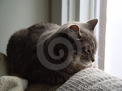 Cat napping near a window