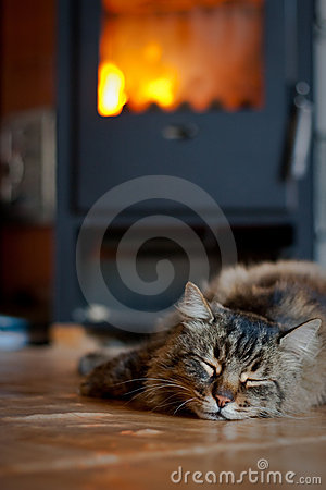 Cat near Fireplace