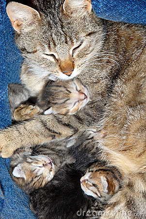 Cat with newborn kitten