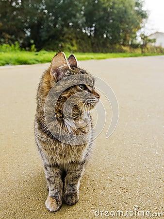 cat observer